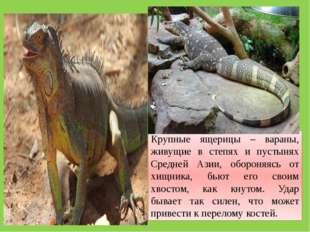 Крупные ящерицы – вараны, живущие в степях и пустынях Средней Азии, обороняяс