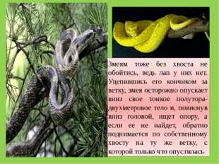 Змеям тоже без хвоста не обойтись, ведь лап у них нет. Уцепившись его кончико