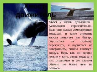 Хвост у китов, дельфинов расположен горизонтально. Ведь они дышат атмосферным