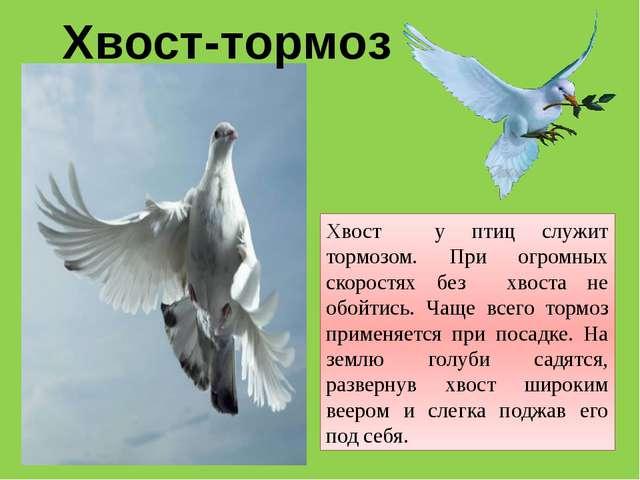 Хвост у птиц служит тормозом. При огромных скоростях без хвоста не обойтись....