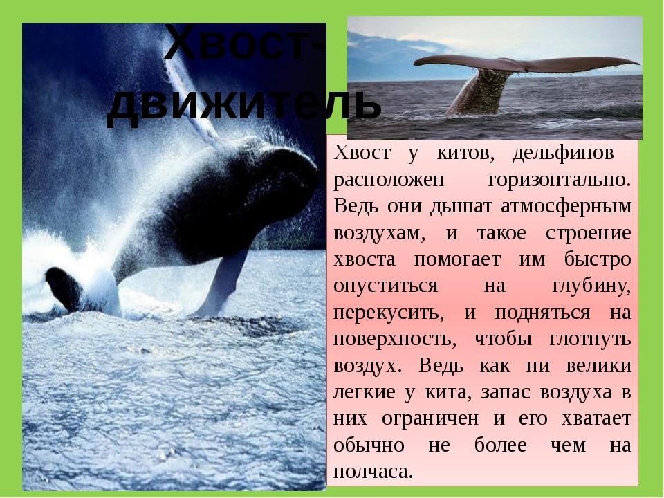 Хвост у китов, дельфинов расположен горизонтально. Ведь они дышат атмосферным...
