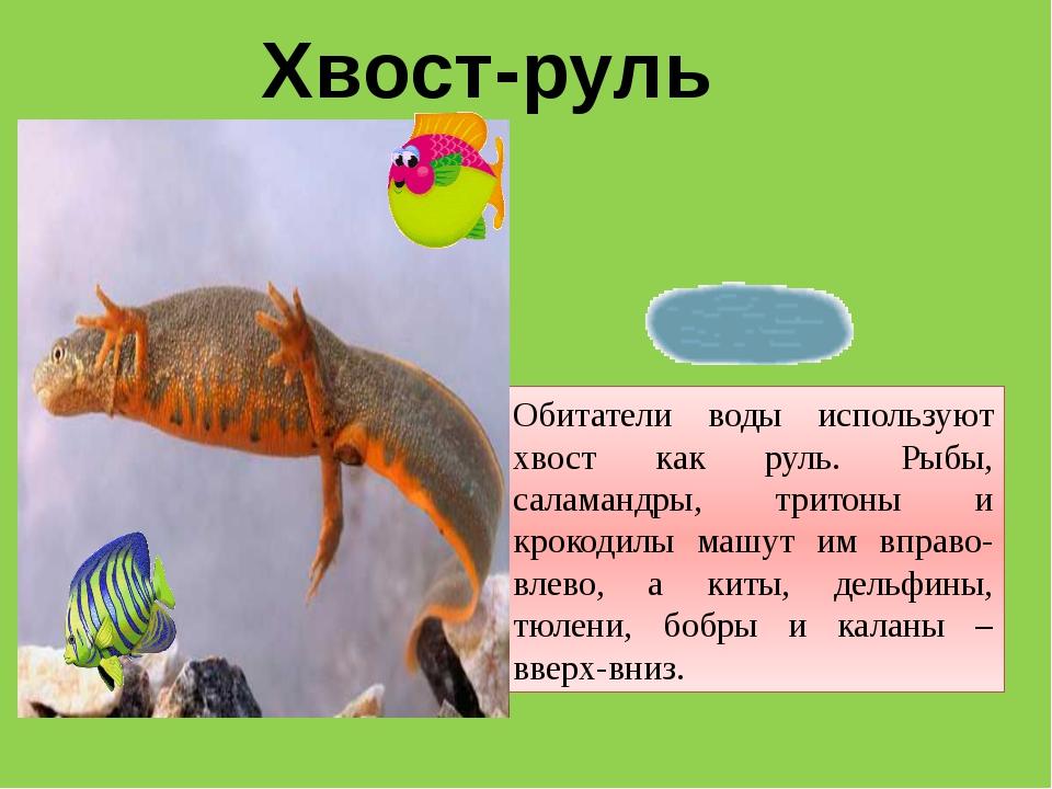 Хвост-руль Обитатели воды используют хвост как руль. Рыбы, саламандры, тритон...