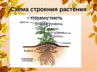 Схема строения растения