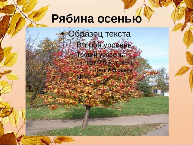 Рябина осенью