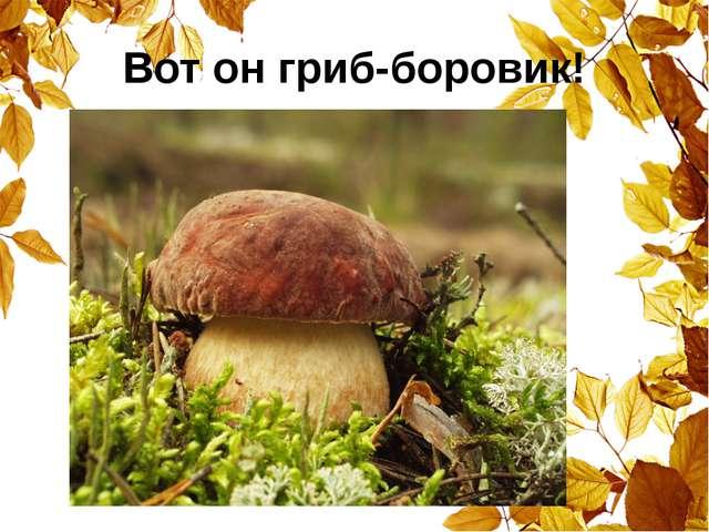 Вот он гриб-боровик!