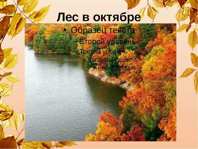 Лес в октябре