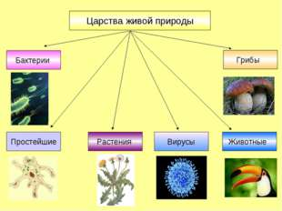 Царства живой природы Бактерии Грибы Растения Животные Вирусы Простейшие