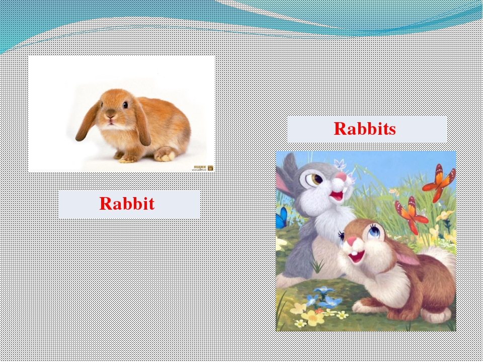 Rabbit Rabbits