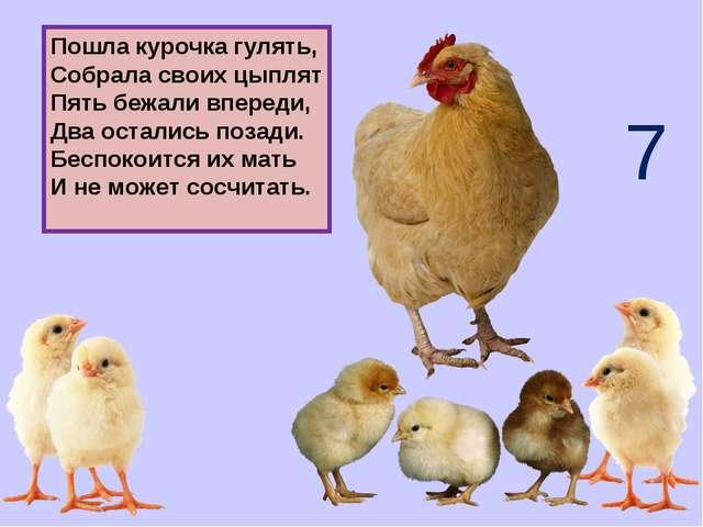 Пошла курочка гулять, Собрала своих цыплят Пять бежали впереди, Два остались...