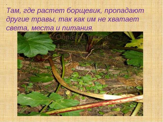 . Там, где растет борщевик, пропадают другие травы, так как им не хватает све...