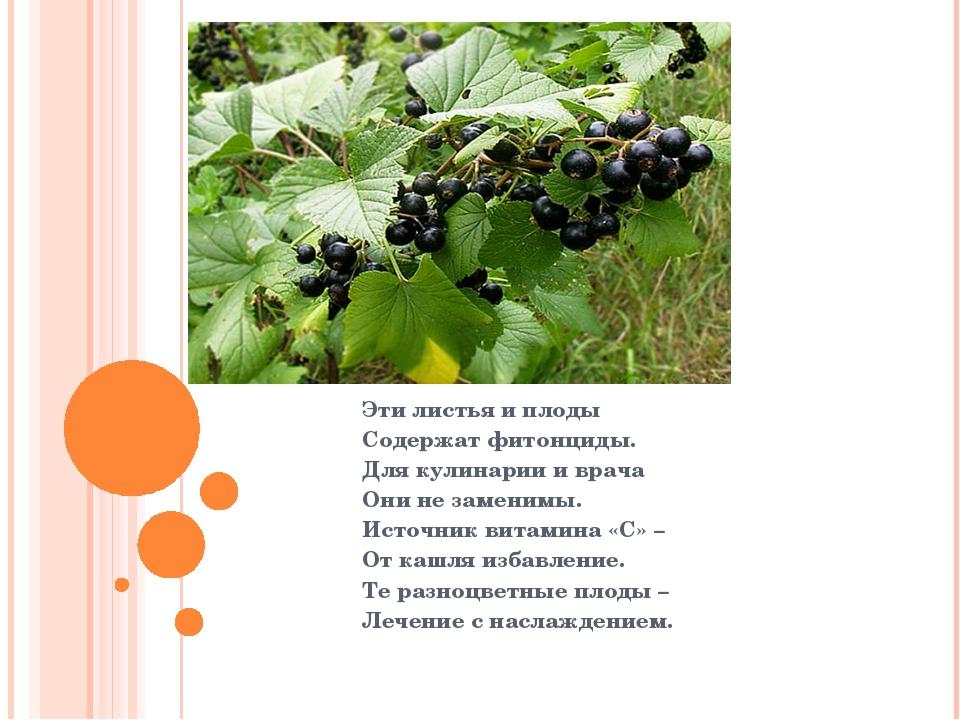 Эти листья и плоды Содержат фитонциды. Для кулинарии и врача Они не заменимы...