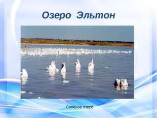 Озеро Эльтон Соленое озеро
