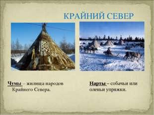 КРАЙНИЙ СЕВЕР Чумы – жилища народов Крайнего Севера. Нарты – собачьи или олен