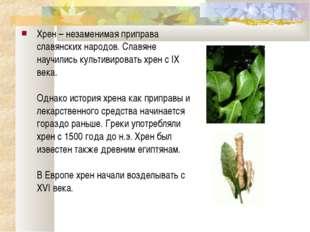 Хрен – незаменимая приправа славянских народов. Славяне научились культивиров