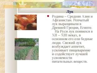 Лук Родина – Средняя Азия и Афганистан. Репчатый лук выращивали в Древней Гре