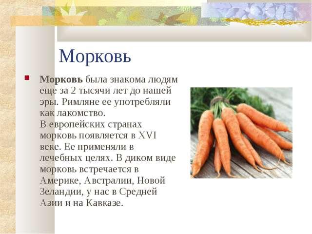Морковь Морковь была знакома людям еще за 2 тысячи лет до нашей эры. Римляне...