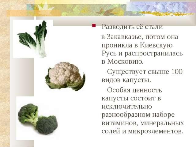 Разводить её стали в Закавказье, потом она проникла в Киевскую Русь и распрос...