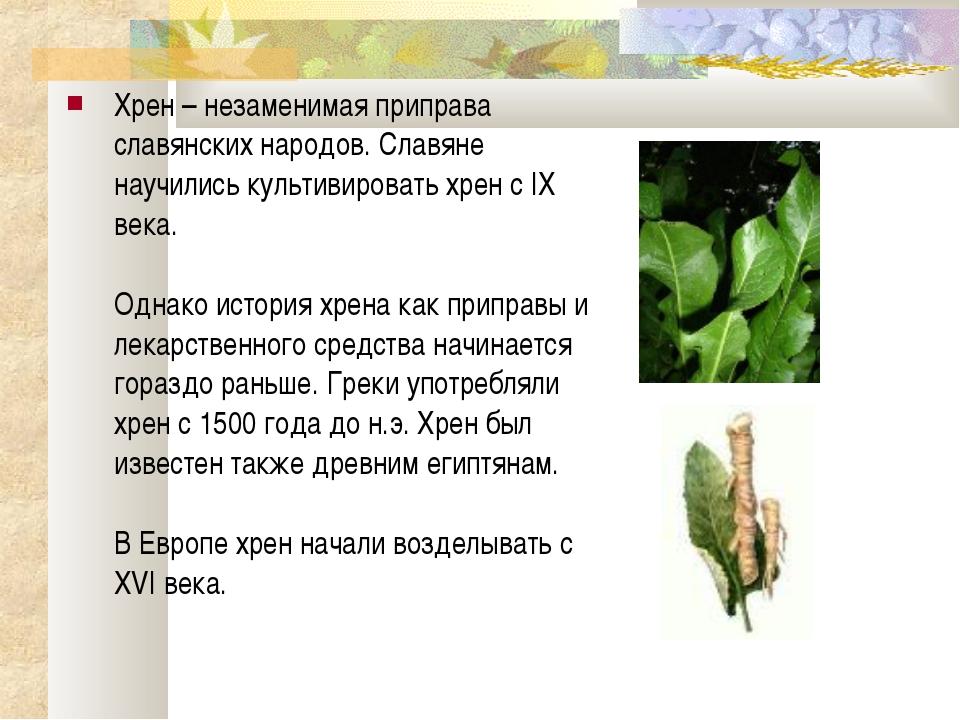 Хрен – незаменимая приправа славянских народов. Славяне научились культивиров...