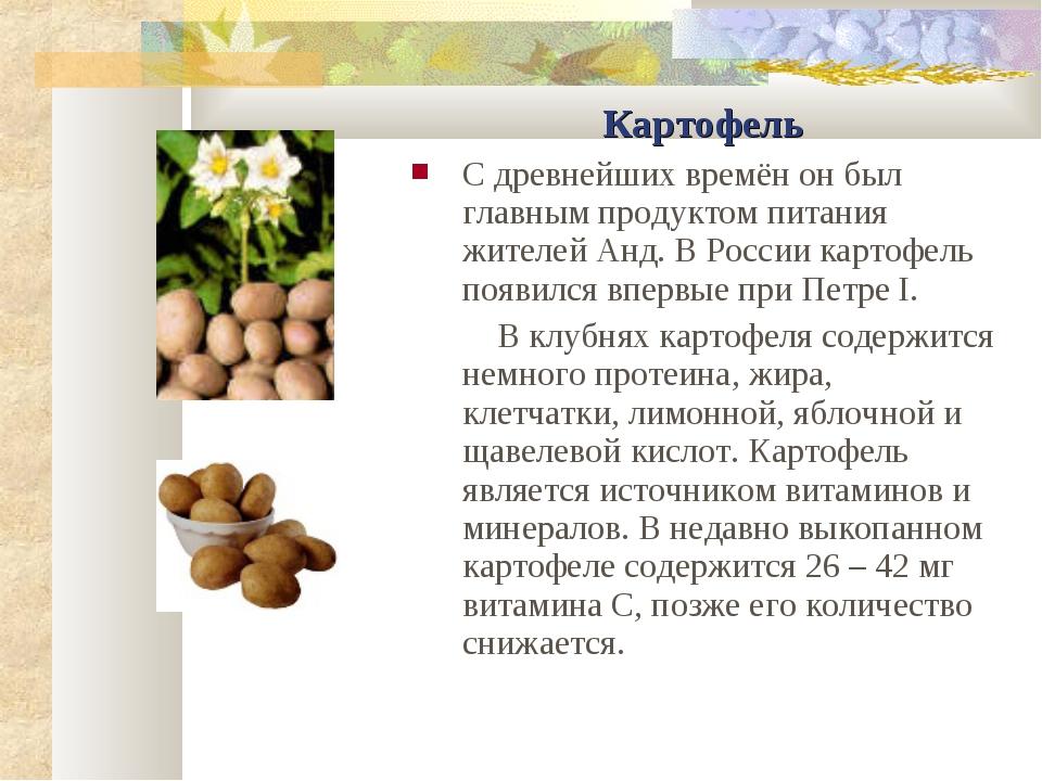 Картофель С древнейших времён он был главным продуктом питания жителей Анд. В...