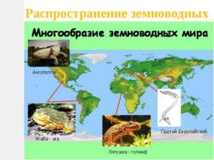 Распространение земноводных