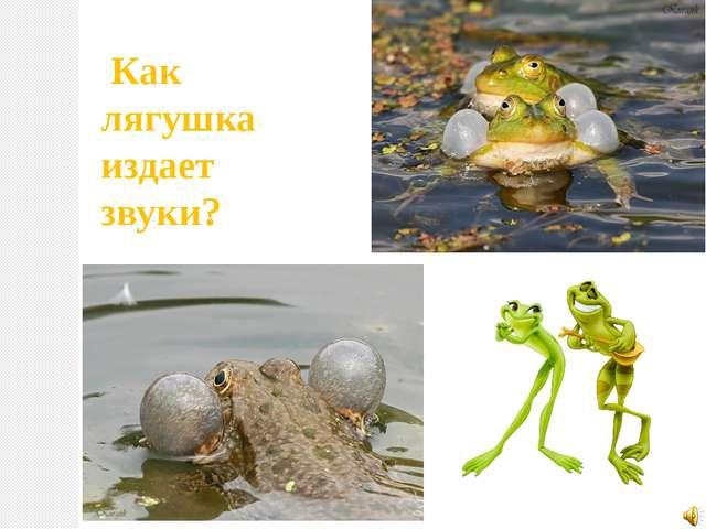 Как лягушка издает звуки?