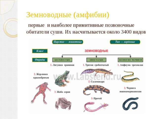 Земноводные (амфибии) первые и наиболее примитивные позвоночные обитатели суш...