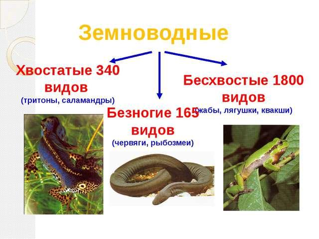 Земноводные Хвостатые 340 видов (тритоны, саламандры) Бесхвостые 1800 видов (...