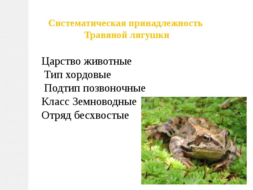Систематическая принадлежность Травяной лягушки Царство животные Тип хордовые...