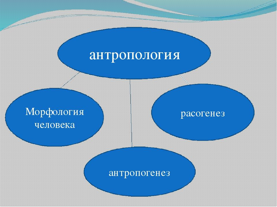 антропология Морфология человека антропогенез расогенез