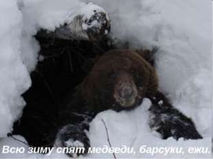 Всю зиму спят медведи, барсуки, ежи.