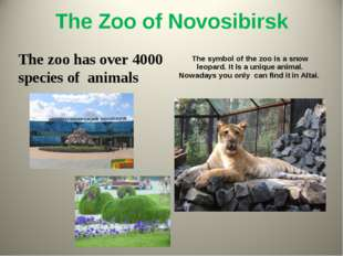 The Zoo of Novosibirsk The zoo has over 4000 species of animals The symbol of