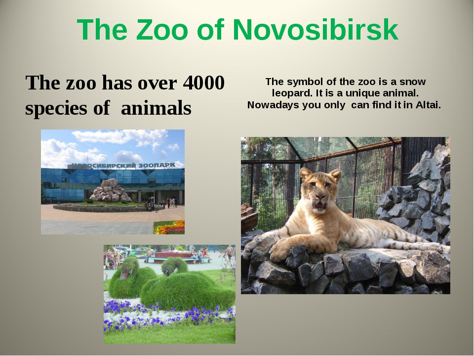 The Zoo of Novosibirsk The zoo has over 4000 species of animals The symbol of...