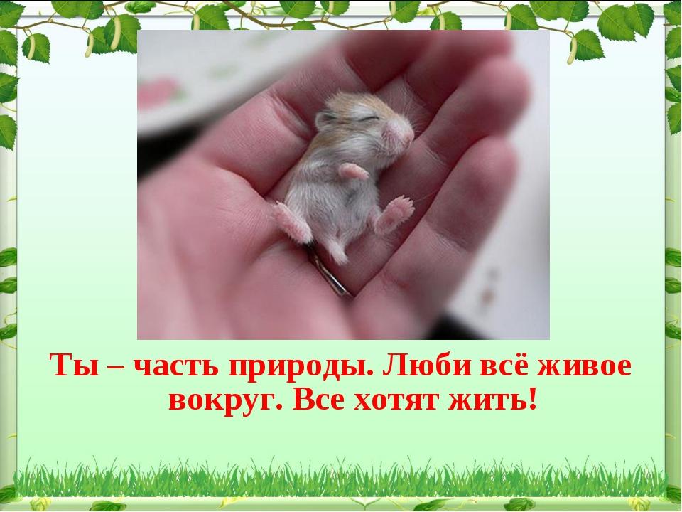 Ты – часть природы. Люби всё живое вокруг. Все хотят жить!