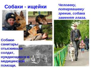 Собаки - ищейки Человеку, потерявшему зрение, собака заменят глаза. Собаки-са