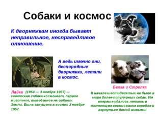 Собаки и космос К дворняжкам иногда бывает неправильное, несправедливое отнош