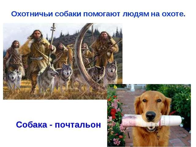 Охотничьи собаки помогают людям на охоте. Собака - почтальон