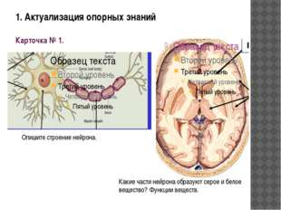 1. Актуализация опорных знаний Карточка № 1. Опишите строение нейрона. Какие