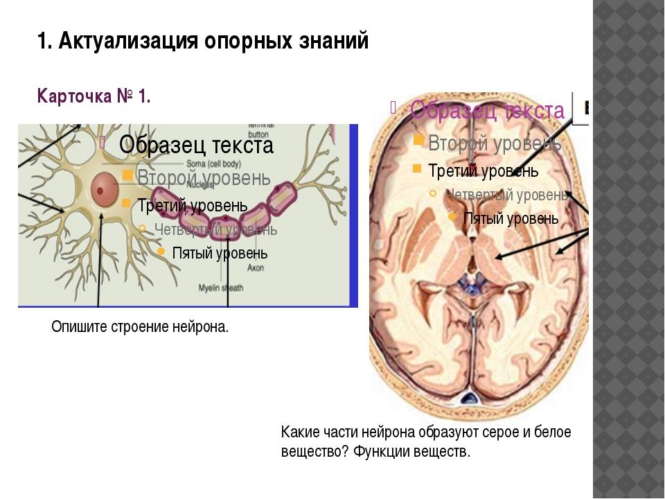 1. Актуализация опорных знаний Карточка № 1. Опишите строение нейрона. Какие...