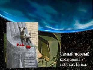 Самый первый космонавт - собака Лайка.