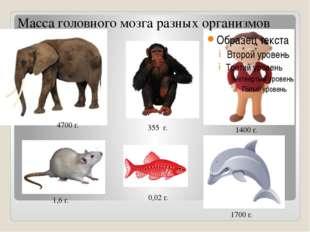 Масса головного мозга разных организмов 4700 г. 355 г. 1400 г. 1,6 г. 1700 г.