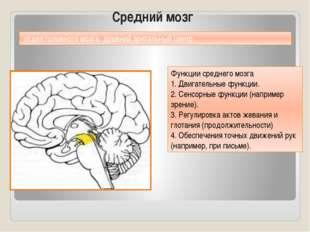 Средний мозг Функции среднего мозга 1. Двигательные функции. 2. Сенсорные фун