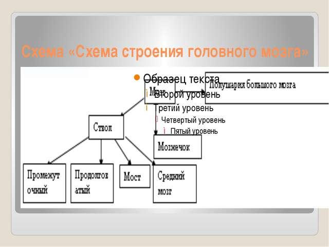 Схема «Схема строения головного мозга»