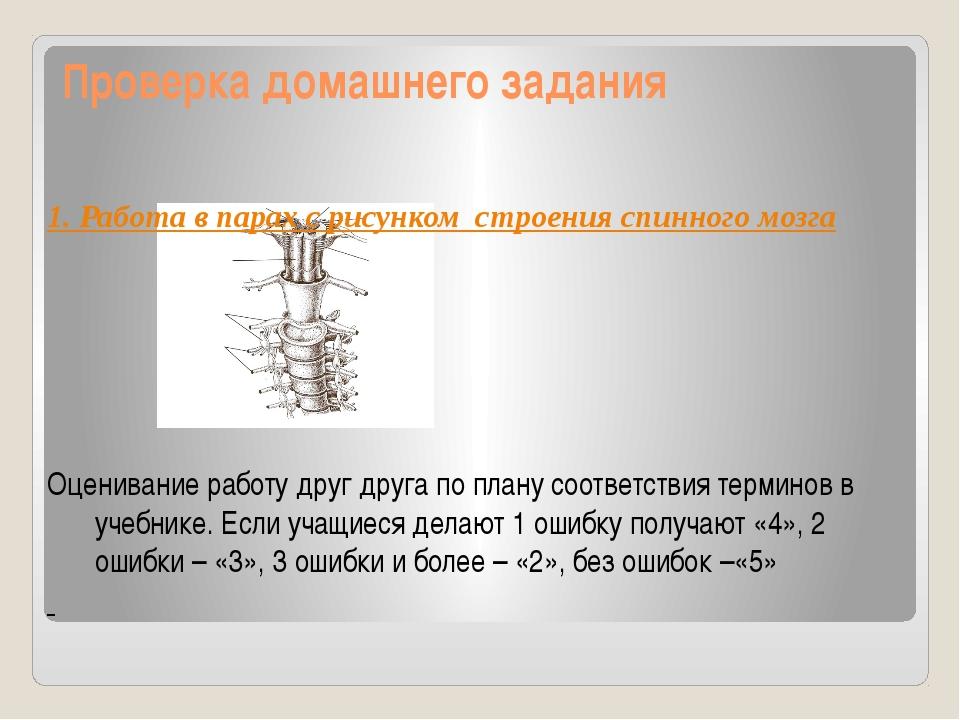 Проверка домашнего задания 1. Работа в парах с рисунком строения спинного моз...