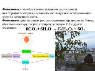 Фотосинтез – это образование зелеными растениями и некоторыми бактериями орга