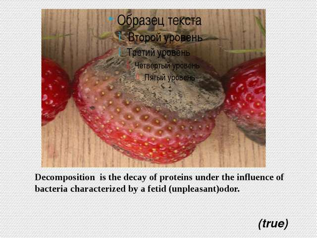 Decomposition is the decay of proteins under the influence of bacteria charac...