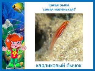 Какая рыба самая маленькая? карликовый бычок
