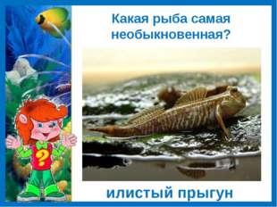 Какая рыба самая необыкновенная? илистыйпрыгун