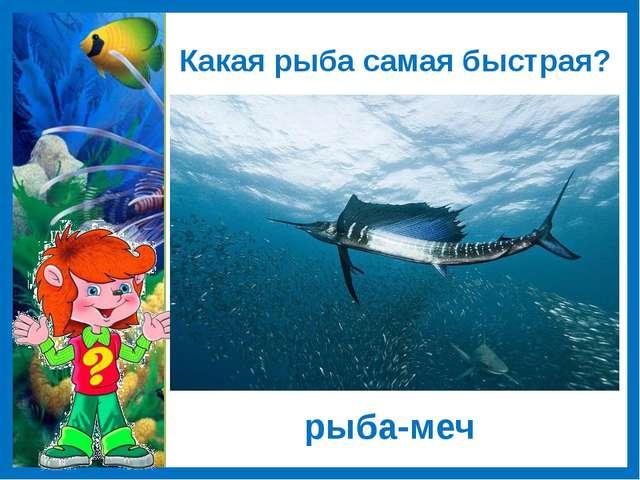 Какая рыба самая быстрая? рыба-меч