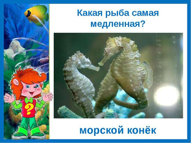 Какая рыба самая медленная? морской конёк