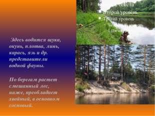 Здесь водится щука, окунь, плотва, линь, карась, язь и др. представители вод